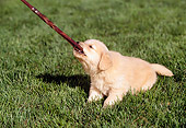 PUP 08 RK0197 06