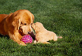 PUP 08 RK0204 05