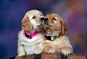 PUP 08 RK0211 10