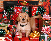 PUP 08 RK0228 06