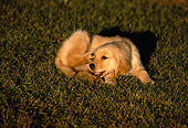 PUP 08 RK0256 01