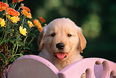 PUP 08 RK0265 16