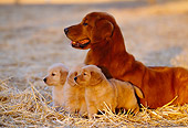 PUP 08 RK0288 10