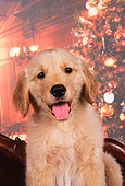 PUP 08 RK0295 03