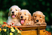PUP 08 RK0304 02