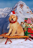 PUP 08 RK0312 01