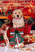 PUP 08 RK0316 03