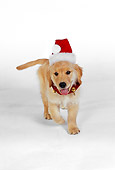 PUP 08 RK0319 03