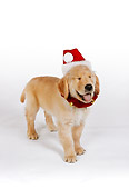 PUP 08 RK0319 07