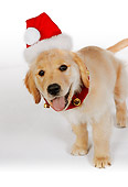 PUP 08 RK0319 08