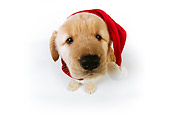 PUP 08 RK0329 02