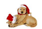 PUP 08 RK0332 06