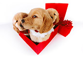 PUP 08 RK0339 02