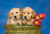 PUP 08 RK0358 01