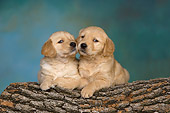 PUP 08 RK0362 01