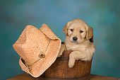 PUP 08 RK0364 01