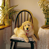 PUP 08 RS0002 03