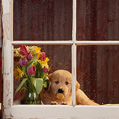 PUP 08 RS0004 01