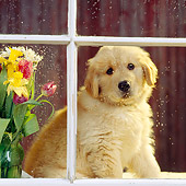 PUP 08 RS0005 01