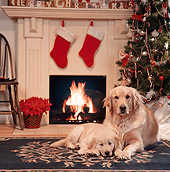 PUP 08 RS0015 05