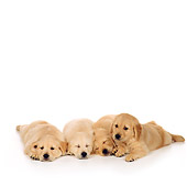 PUP 08 RS0024 04