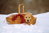 PUP 08 RW0001 01
