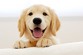 PUP 08 YT0001 01