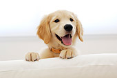 PUP 08 YT0002 01