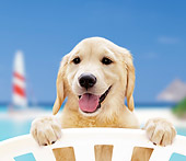 PUP 08 YT0003 01