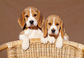 PUP 09 CB0005 01