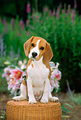 PUP 09 CE0003 01