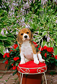 PUP 09 CE0004 01