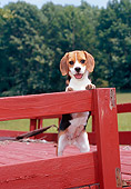 PUP 09 CE0020 01