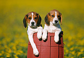 PUP 09 GR0010 01