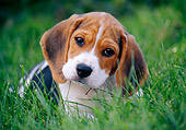 PUP 09 GR0040 01
