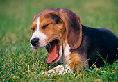 PUP 09 GR0041 01