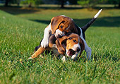 PUP 09 GR0044 01