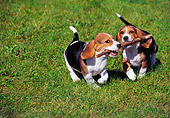 PUP 09 GR0046 01
