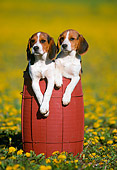 PUP 09 GR0053 01