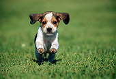 PUP 09 GR0054 01