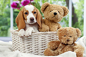 PUP 09 JE0010 01