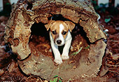 PUP 09 JN0001 01