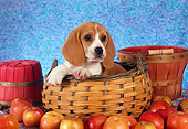 PUP 09 RC0005 01