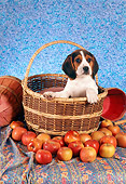 PUP 09 RC0006 01