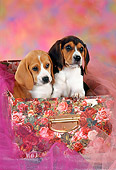 PUP 09 RC0008 01