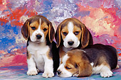 PUP 09 RK0062 03