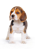 PUP 09 RK0067 05