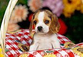 PUP 09 RK0094 03