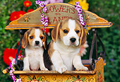 PUP 09 RK0104 07