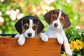 PUP 09 RK0203 01